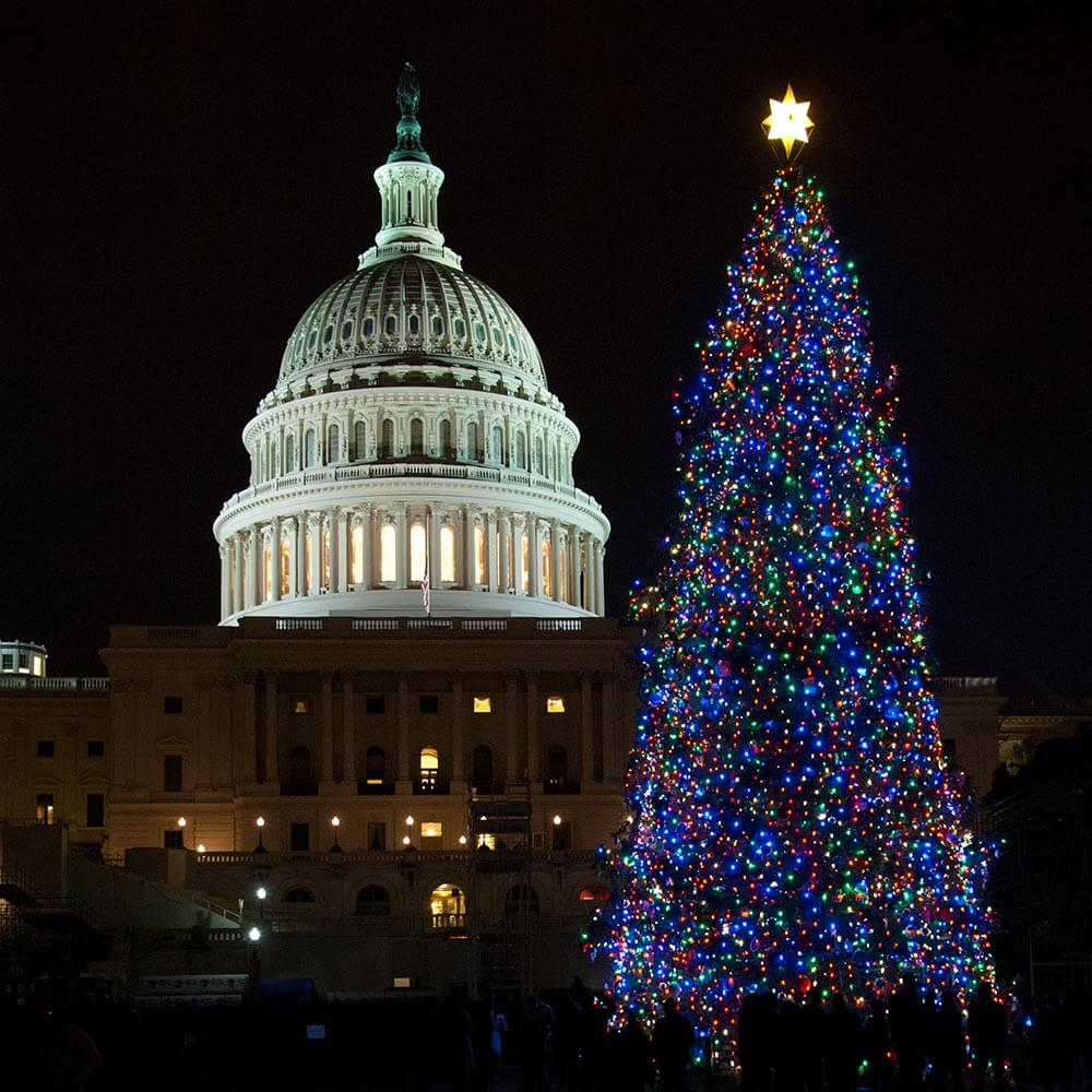 Christmas Trees USA