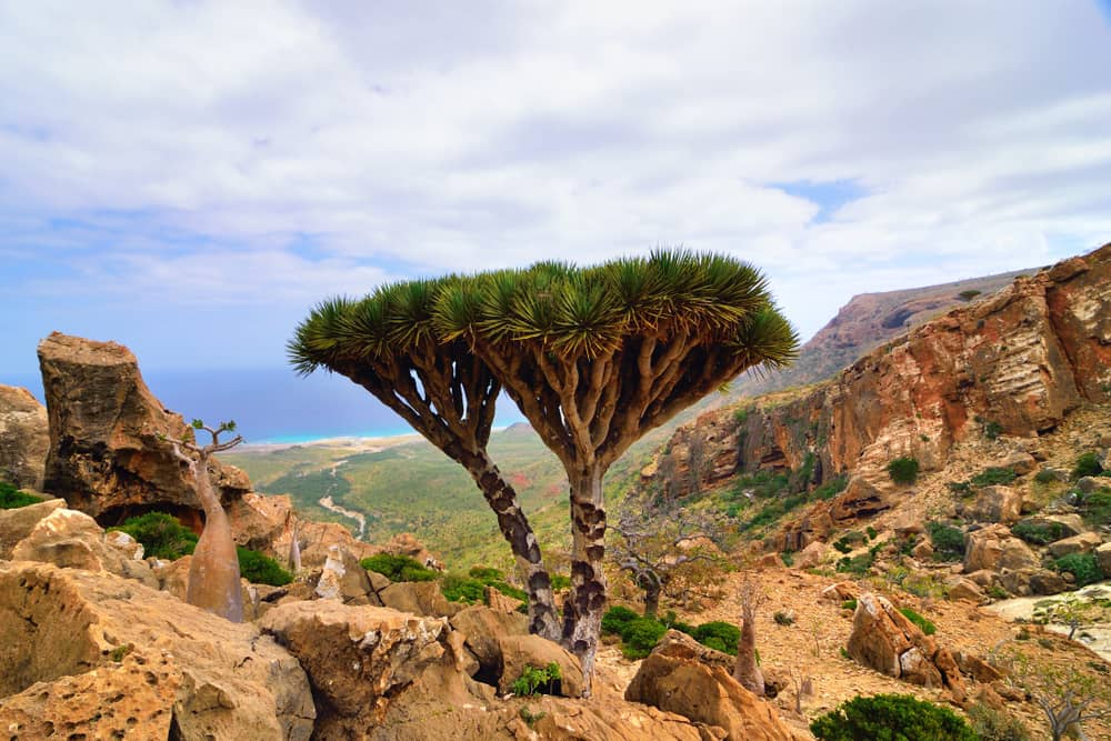 Socotra, Yemen, Middle East, Island Destination, Beautiful places, remote places, dragon blood trees, desert, beach, white sand beach, mountains, cliffs, amazing destinations, vacations, holidays, dream travel, tourism, best places to travel